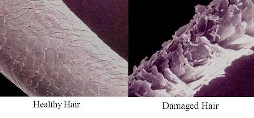 Mầm tóc chết dần vì không thể thoát khỏi sự bao phủ của Silicone trên tóc và da đầu!